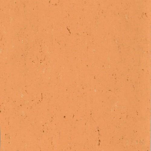 137-078 african orange