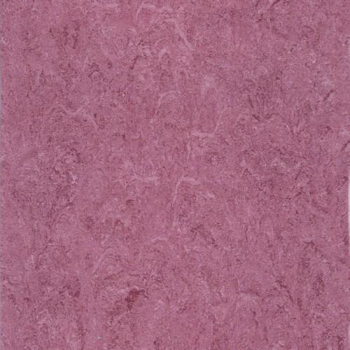 121-113 purple sun